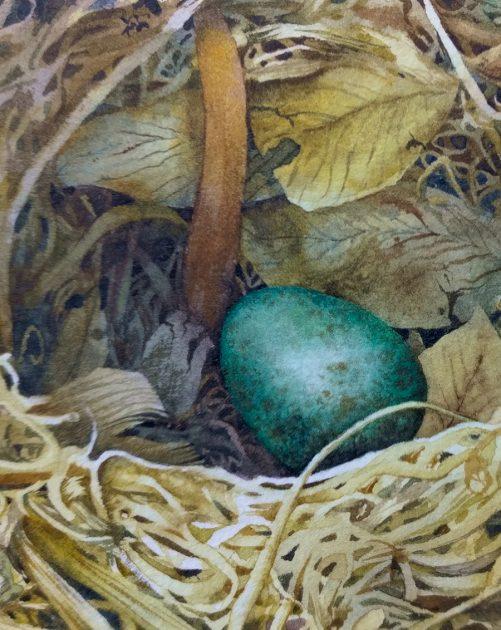 blackbird egg in watercolour
